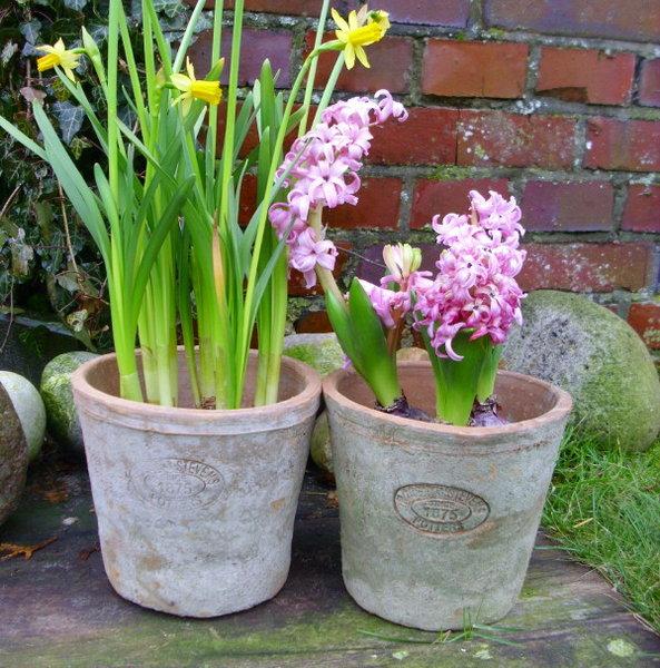 2er set blument pfe pflanzt pfe robert stevens for Blumentopf landhausstil