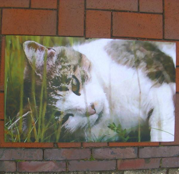 Fussabtreter Fussmatte Katze